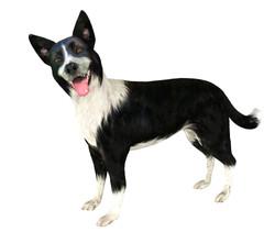 dog_large_standing