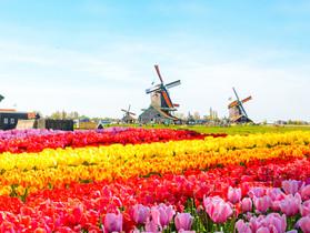 Кёкенхов - море цветов и удовольствия!
