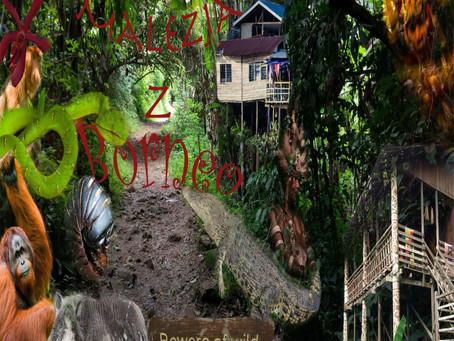 Azjatycki Trip - Kwiat, świątynia jaskiniowa, śnieżne plaże i małpa ptak... czyli Malezja z Borneo.