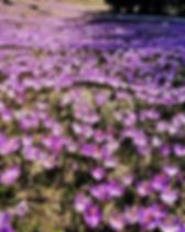 IMG_20190418_095915-01 (Medium).webp