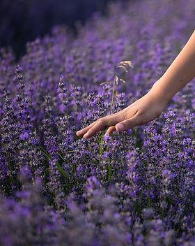 lavender-3576129_1280.jpg