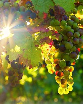 grapes-3550729_1280.jpg
