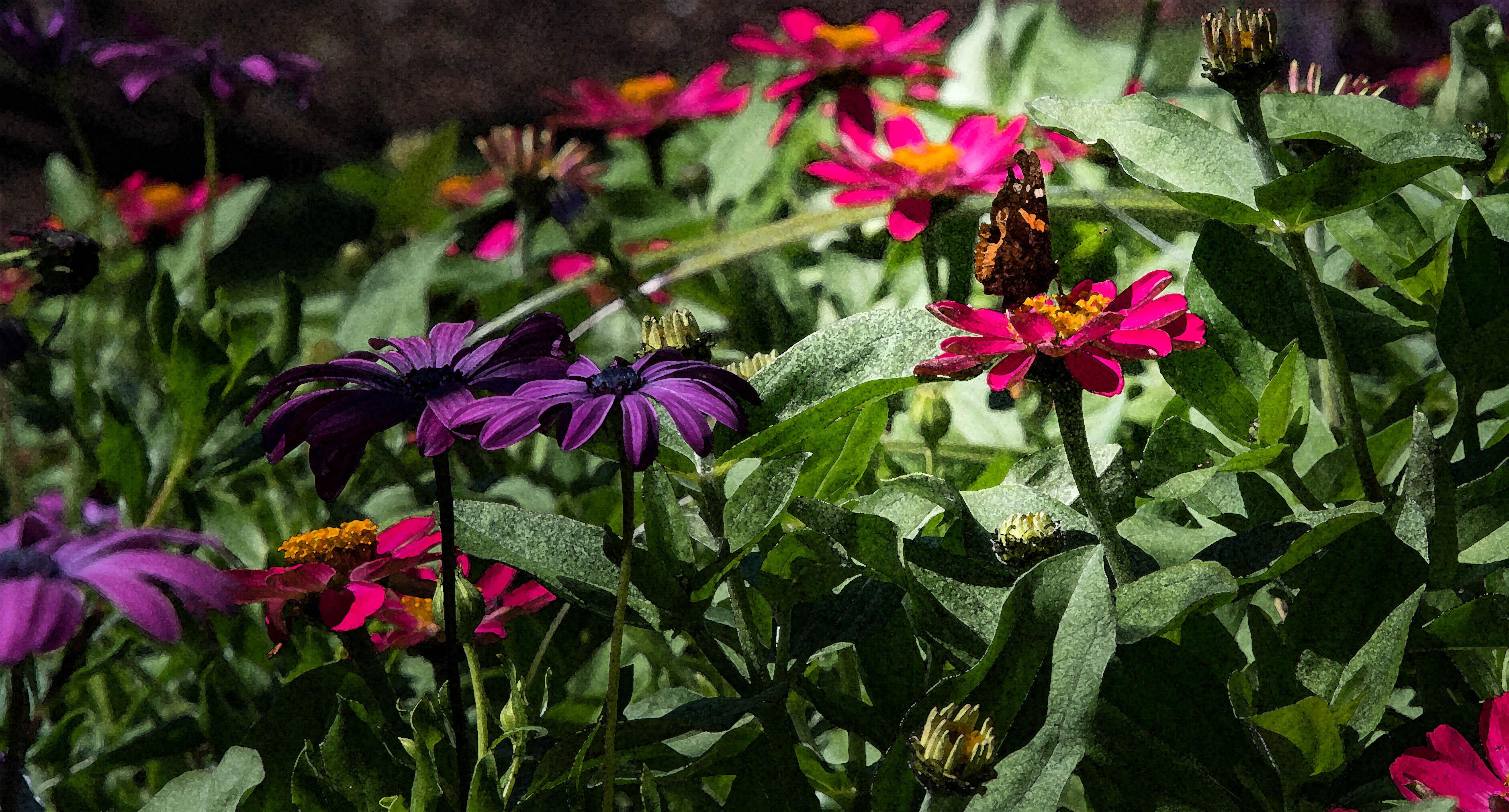 Flower Butterfly Texture