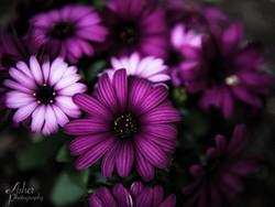 Fine Art - Floral