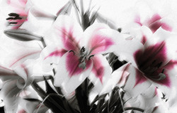 Lillies with Texture