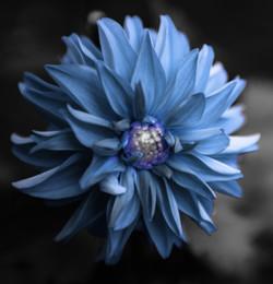 Centre Flower Blue PS