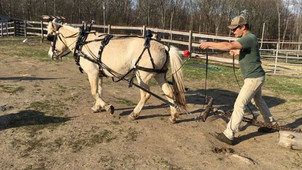 #farmlife #fjord #mare #draftpony #carri