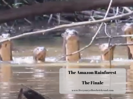 The Amazon: The Finale