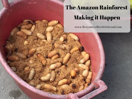 The Amazon Rainforest: Making It Happen