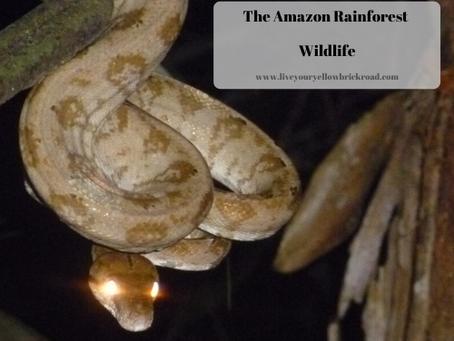 The Amazon: Wildlife