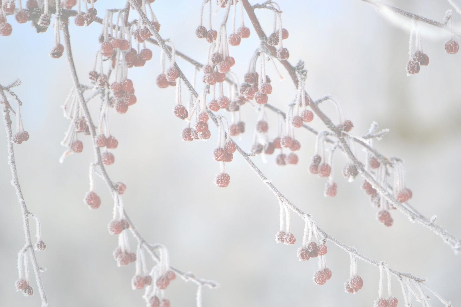 Frozen%20Berries_edited.jpg