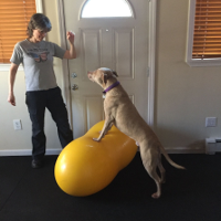 Romeo working on strengthening his hindquarters to lessen the likelihood of sustaining a ligament injury.
