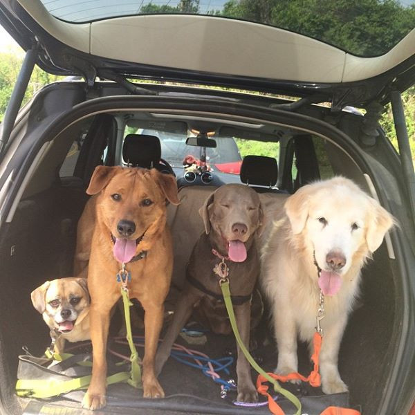 Going to Ward Acres Dog Park