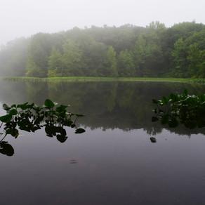 The Greenbelt: High Rock Park