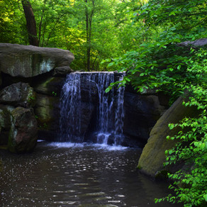 Central Park: The North Woods