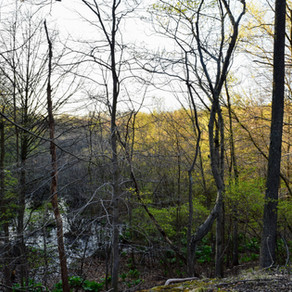Clay Pit Ponds State Park