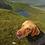 Thumbnail: Braemar Wax cotton dog coat