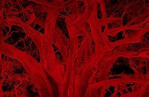 TULE en rojo II.jpg