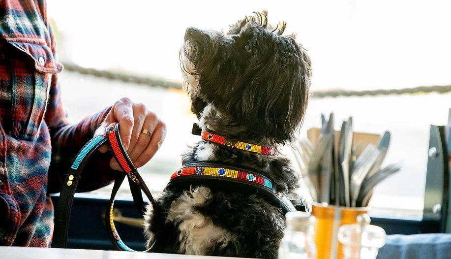 KIVULI Pet Accessories