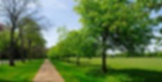 Green space Westhampnett