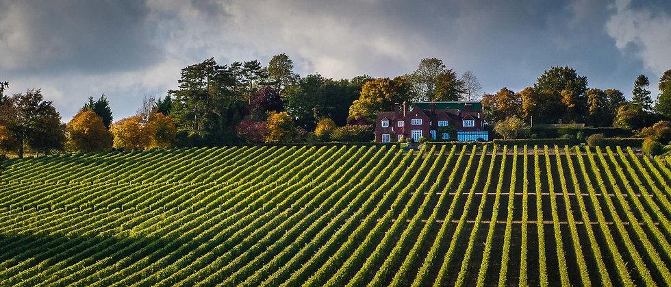 Hambledon Vineyard and House