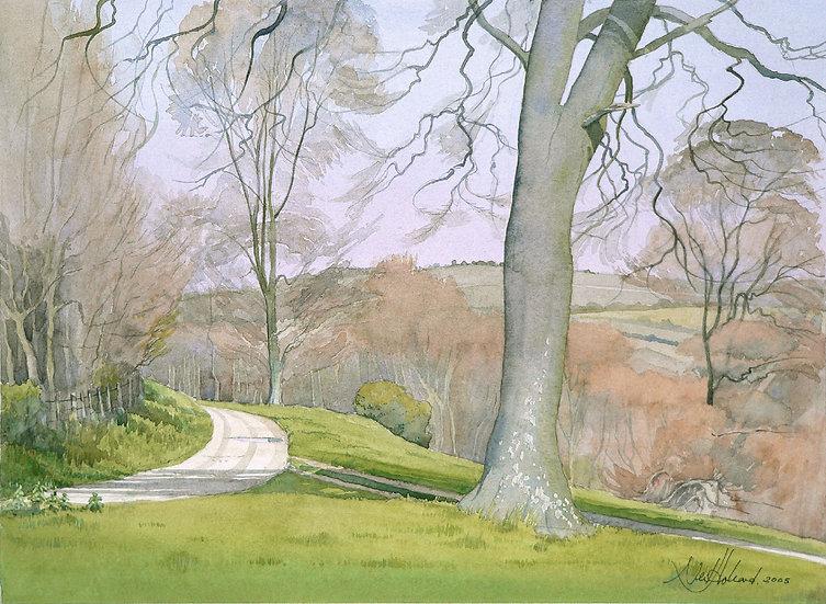 Spring Beech Trees