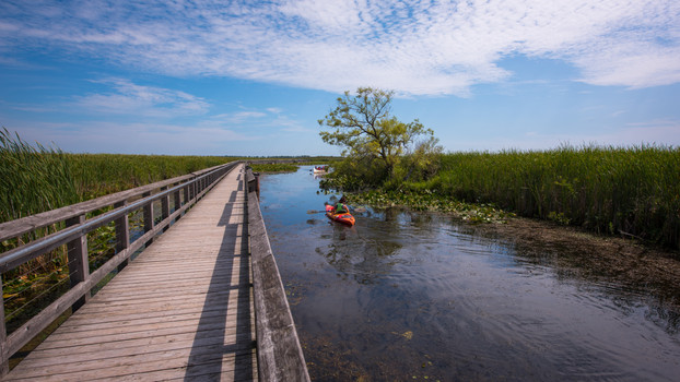 Point Pelee National Park, Ontario