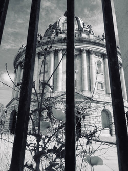 Radcliffe Camera with poppies