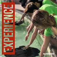 PTA Experience Insta.jpg