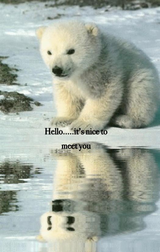 Hello... it's nice to meet you