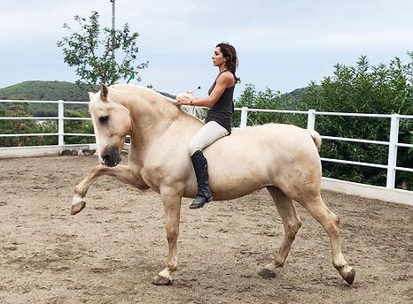 Horses For Commercials