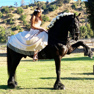 Quinceanera with Four Legs On Set