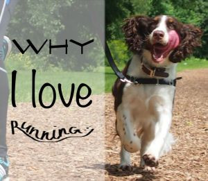 Why dogs love running