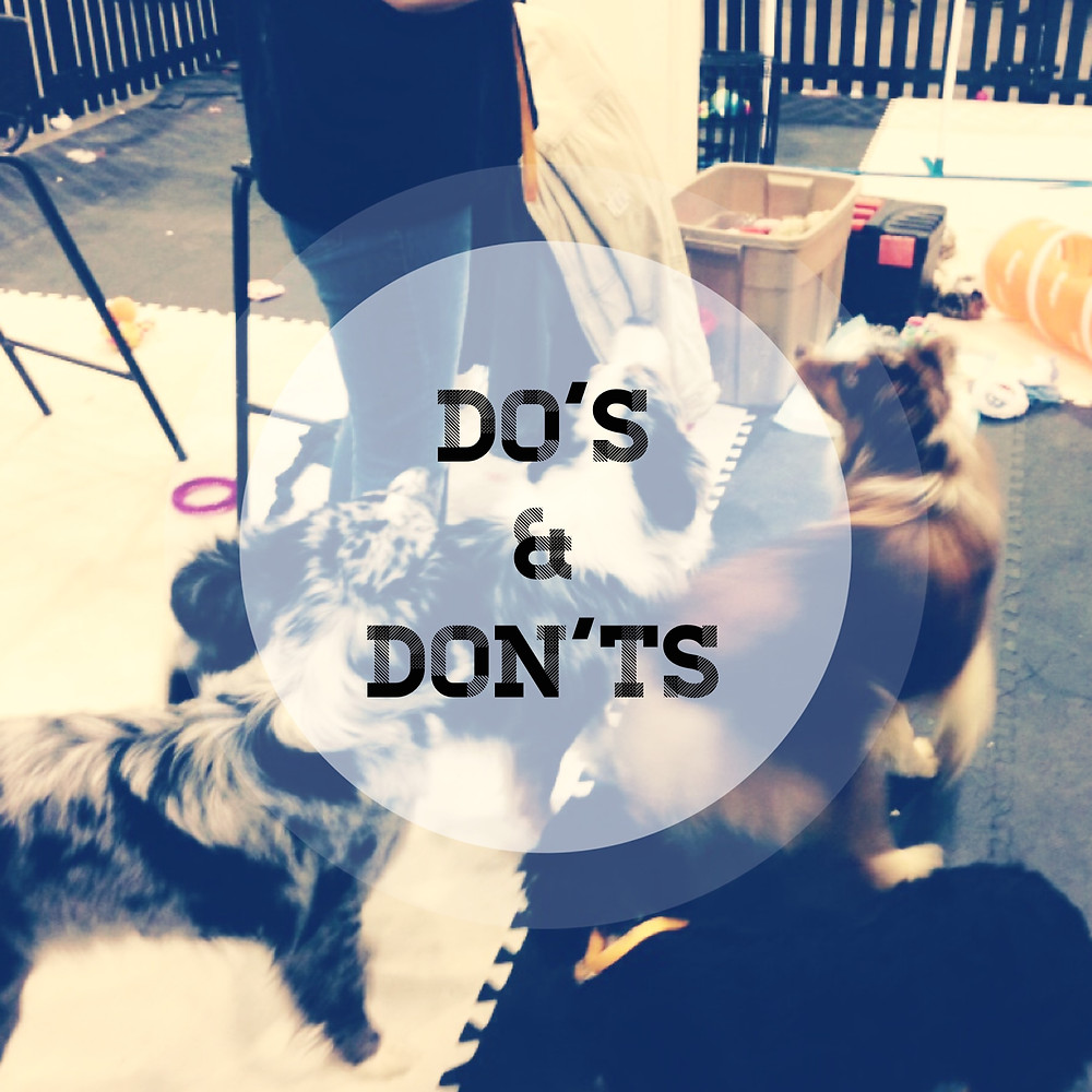 Do's and don'ts of selecting a dog walker, a daycare, or a boarding facility
