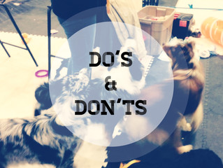 Do's and Don'ts of selecting a dog walker, a daycare or a boarding facility