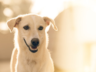 How to control or lessen separation anxiety in dogs
