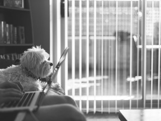 Make It Less Daunting to Create a Balanced Life for Your Dog
