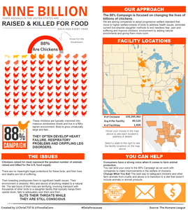 Data for a Cause - Chicken Factory Farms by Chris Conn & Fiorella Conn
