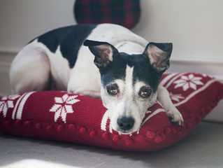 What Could You Do to Make the Time Your Dog Spends Alone Easier to Handle
