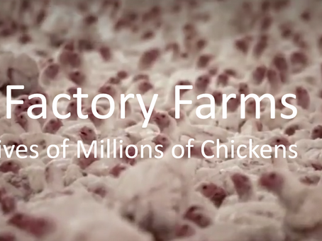 Visualizing Chicken Factory Farms