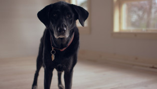 Treating mild cases of separation anxiety in dogs