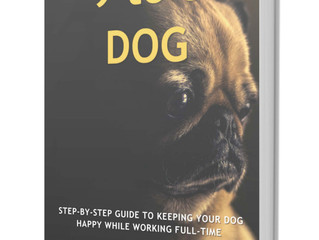 Seeking suggestions and case studies for my new book 9 to 5 Dog