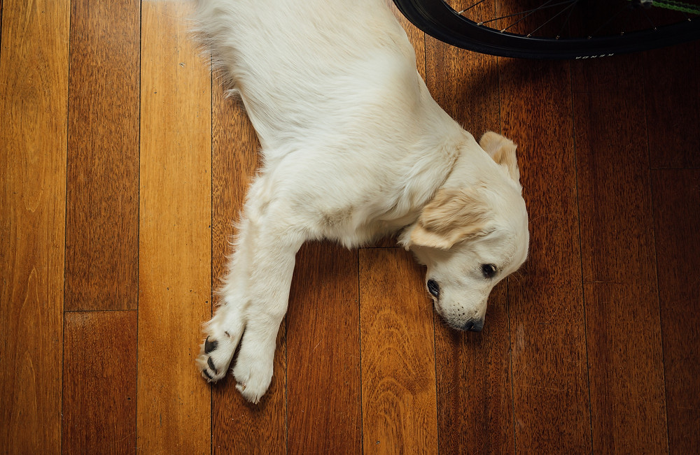 dog separation anxiety symptoms