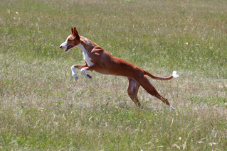 5 Dog Breeds that Love to Run
