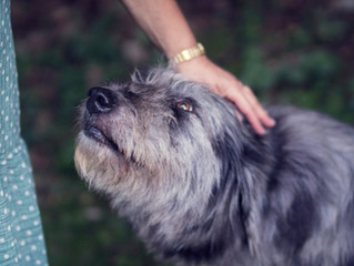 Dog separation anxiety: symptoms and diagnosis
