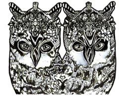 Owl Seeing Eyes