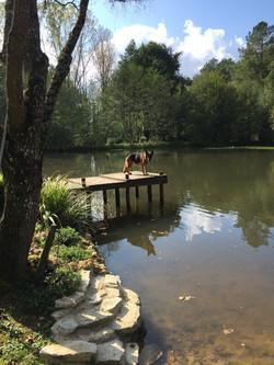 german shepherd by lake