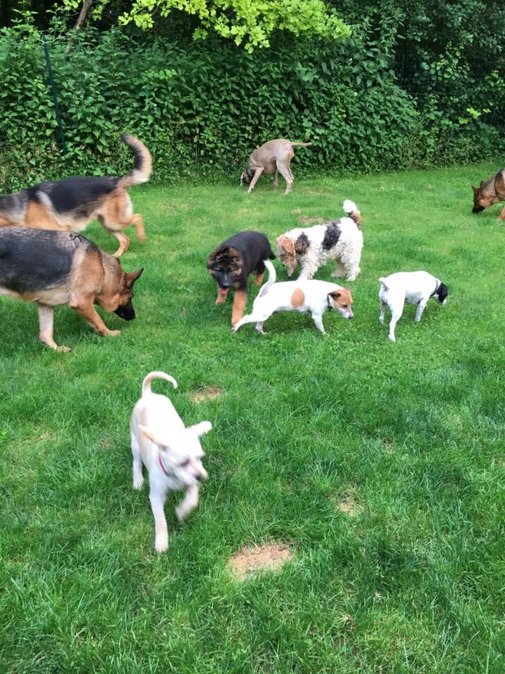Dogs in park, chien dans parc detent