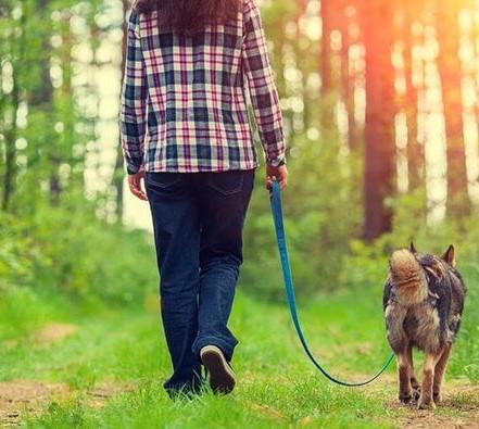 Pour ce soir, nous allons vous donnez quelques conseils pour bien apprendre à votre chiot la marche