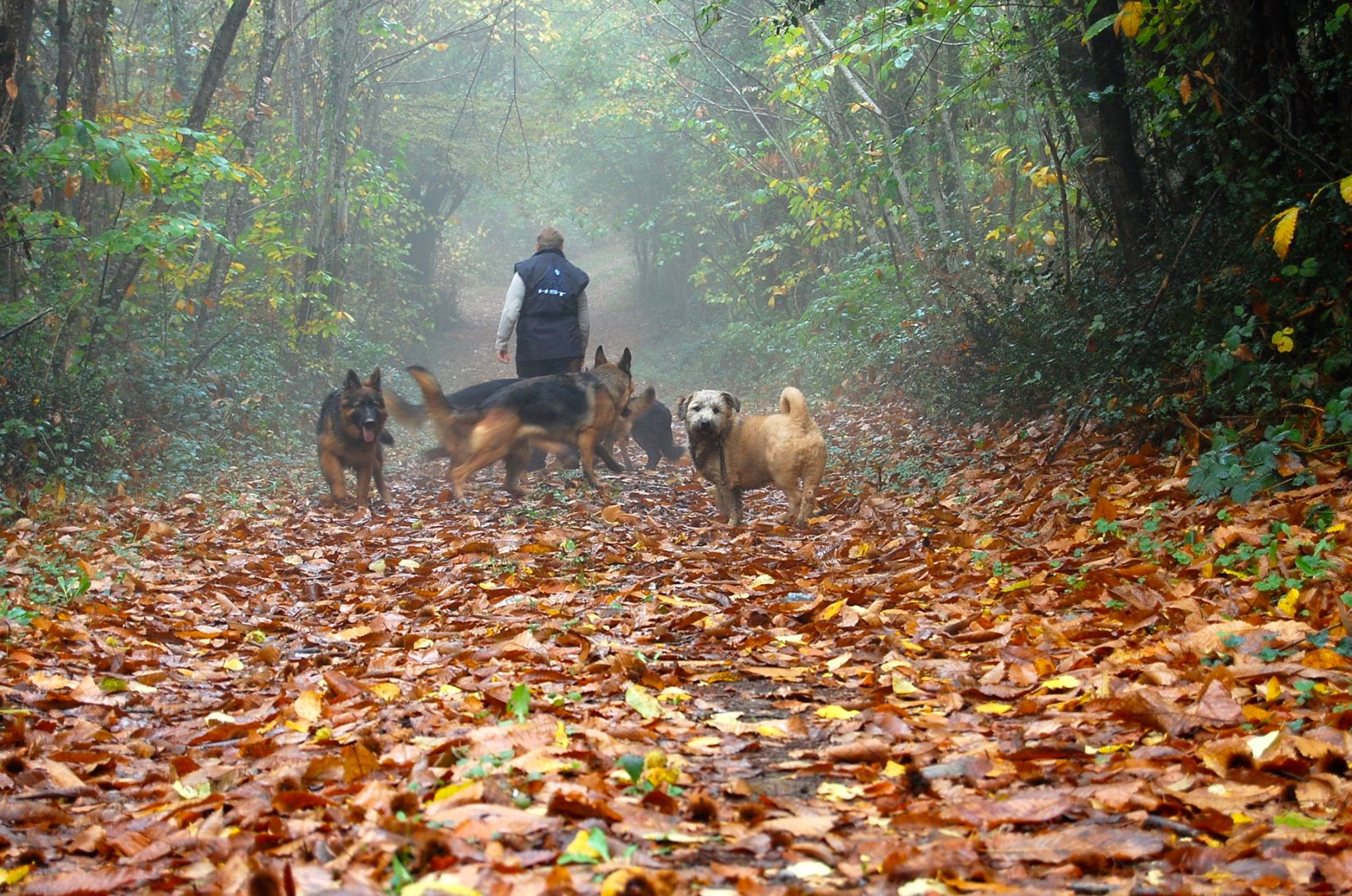 dogs out walking in woods